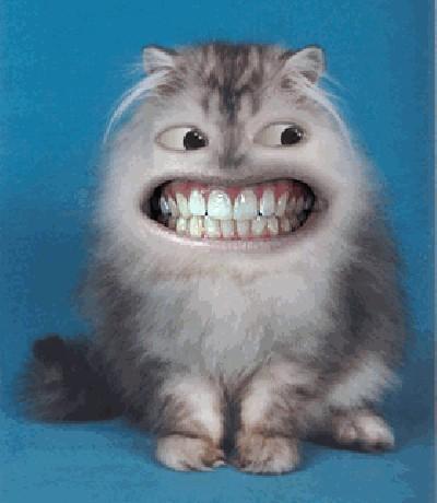... VTIP - Fotoalbum - animace - animace o zvířatech - mrkající kočka